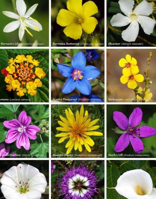macam-macam-bunga