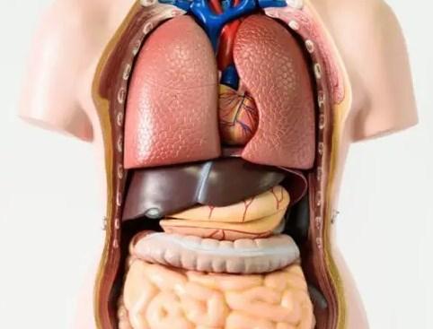 Fungsi-dan-Sistem-Kerja-Organ-Tubuh-Manusia